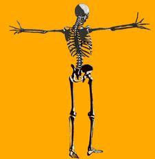 Free Bone  `140 Stock Photo - 711910