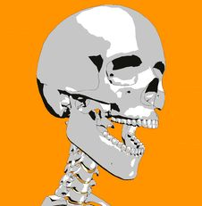 Free Skull 19 Royalty Free Stock Photography - 711947