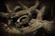 Free Twisted Old Trees Royalty Free Stock Images - 712159