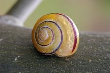 Free Snail On Tree Bark, Macro Horizontal Stock Images - 715314