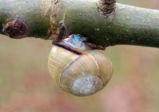 Free Snail Hanging Around Stock Photo - 715360