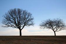Free Quiet Tree Top Royalty Free Stock Photos - 715578