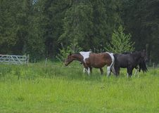 Free Horses In Pasture Stock Photography - 715832