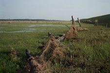 Free Wet Meadow Stock Image - 716361