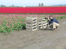 Free Photographer In The Tulip Fields Royalty Free Stock Images - 717139