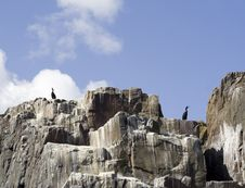 Free Seabirds On Guano Covered Cliff. Royalty Free Stock Photography - 717437