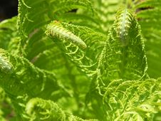Free Fern Stock Photography - 717872