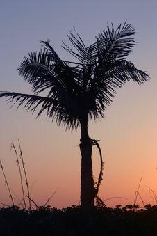 Free Palm Tree Silhouette Stock Image - 717951
