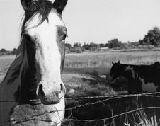 Free One Horse Stock Photography - 717962