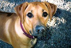 Free Digging Dog Stock Image - 718041