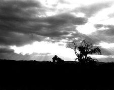 Free Lonely Tree Stock Photo - 718120