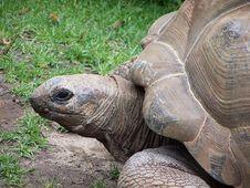 Free Turtle Stock Photos - 719253