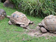 Free Turtle Royalty Free Stock Photo - 719345