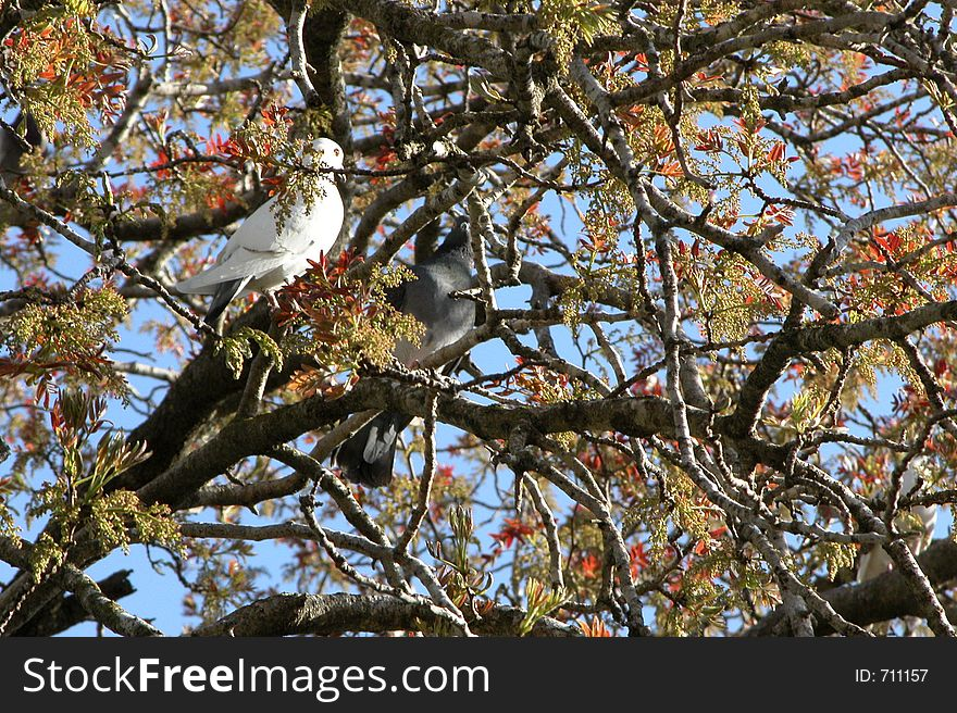 Pigeons resting on the tree