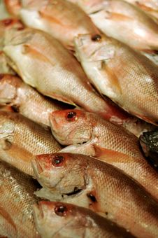 Free Fish Stock For Sale Royalty Free Stock Images - 7102209