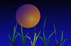 Night Grass On Background Of The Moon Stock Photography