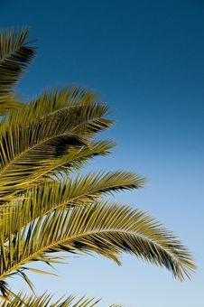 Free Palm Tree Leaf Stock Image - 7143211