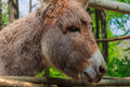 Free The Donkey Stock Image - 71667001