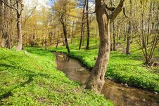 Free Flowing Stream In City Park Royalty Free Stock Photo - 71719335