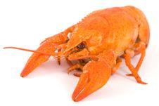 Free Boiled Crayfish Stock Image - 7187261