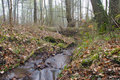 Free Forest Stream Royalty Free Stock Images - 725539