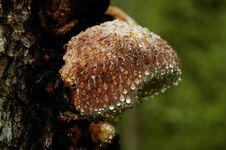 Free Polypore Stock Photo - 720610
