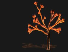 Free Tree In Fire Stock Images - 720764