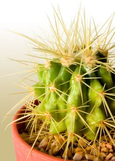 Free Cactus Color Background Stock Images - 721284