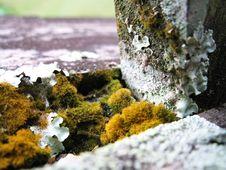 Free Moss Royalty Free Stock Image - 722076