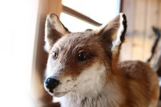 Free Fox Stock Photo - 724170