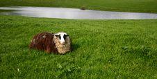 Free Sheep Royalty Free Stock Photos - 724238