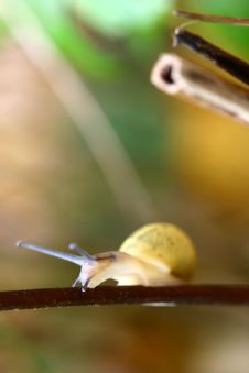 Free Snail Royalty Free Stock Image - 724246