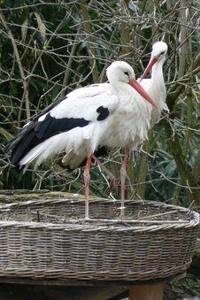 Free Stork Love Stock Photos - 724683