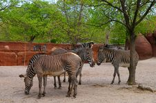 Free Zebras At The Zoo Stock Photos - 724723