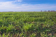 Free Green Meadow Stock Photography - 724902