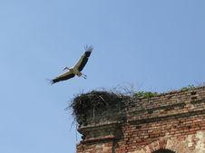 Free Stork Leaving Nest Stock Photography - 725132