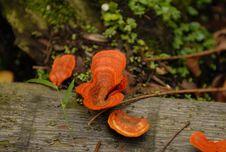 Free Wild Mushroom Stock Photography - 727702