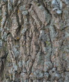 Free Close Up Of Bark With Lichen Royalty Free Stock Image - 727726