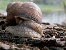 Free Snail Stock Image - 728391