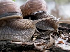 Free Snails Stock Images - 728494