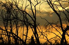 Trees In Dusk Royalty Free Stock Image