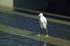 Free Heron Stock Images - 729044