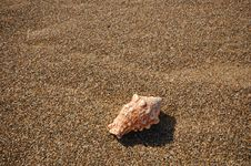 Free Seashell On The Beach Royalty Free Stock Photos - 729658