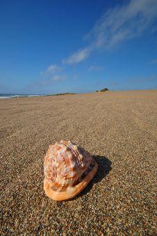 Free Seashell On The Beach Stock Photo - 729680