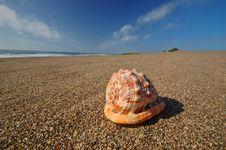Free Seashell On The Beach Stock Photography - 729682