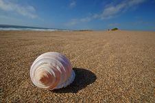 Free Seashell On The Beach Stock Photos - 729683