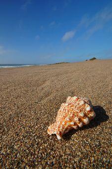 Free Seashell On The Beach Royalty Free Stock Photos - 729688