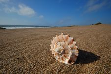 Free Seashell On The Beach Stock Photo - 729690