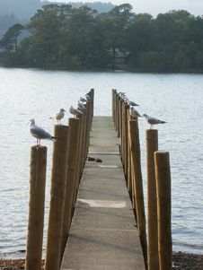 Free Gulls In A Row Stock Image - 729921
