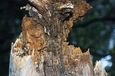 Free Damaged Wood Royalty Free Stock Photography - 7205967